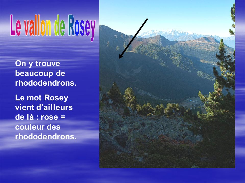 Le vallon de Rosey On y trouve beaucoup de rhododendrons.