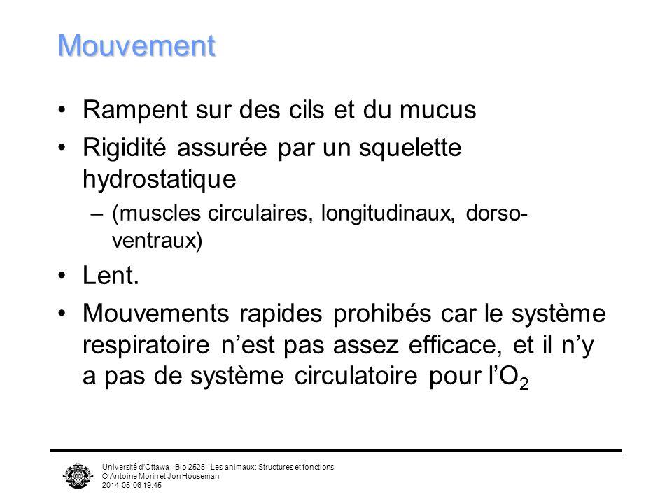 Mouvement Rampent sur des cils et du mucus