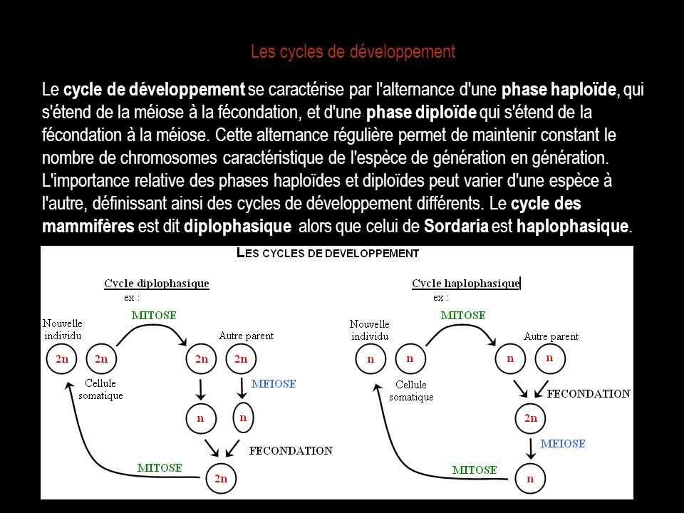 Les cycles de développement