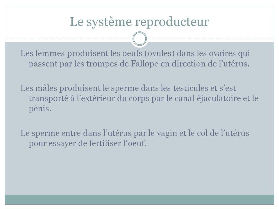 Le système reproducteur