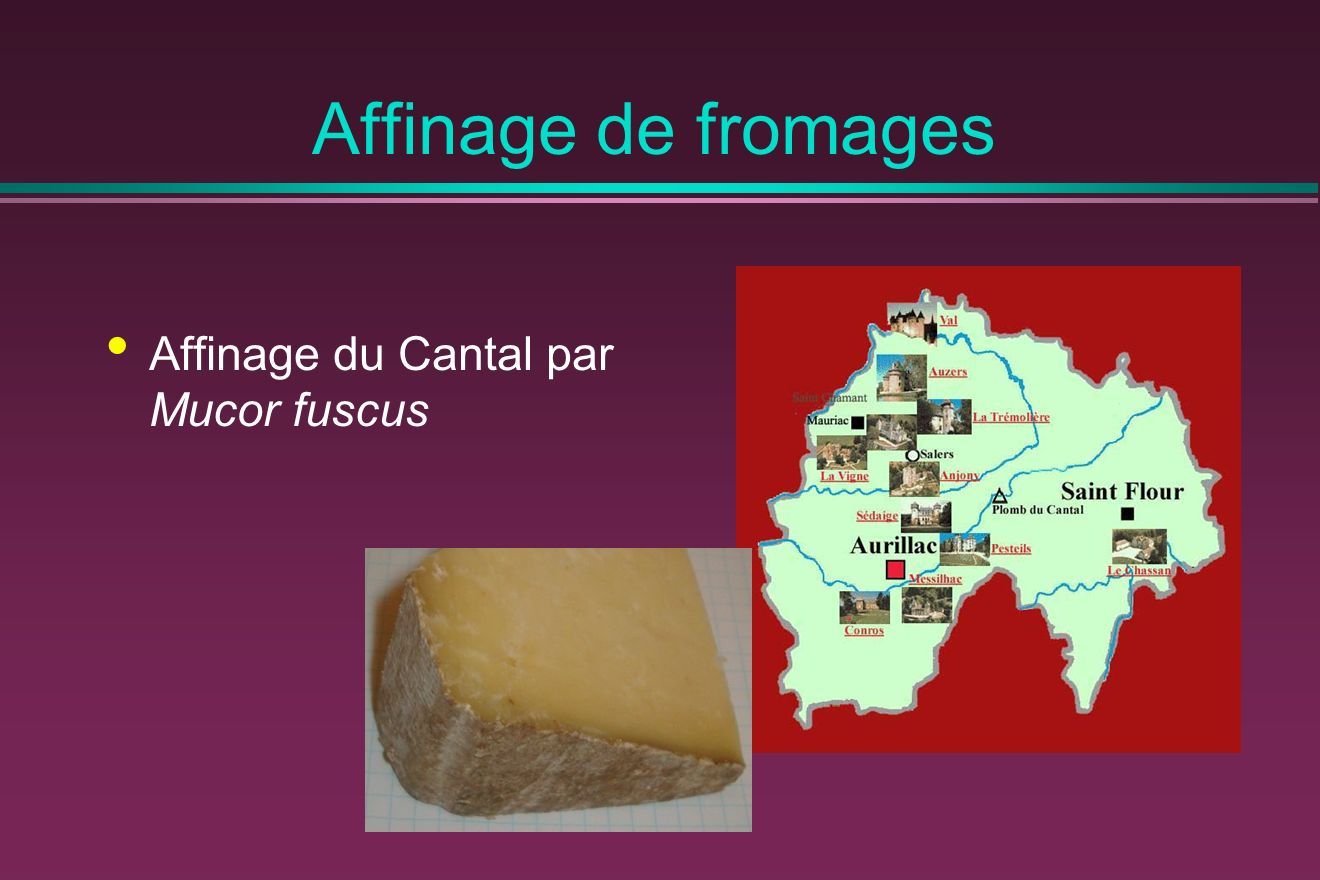 Affinage de fromages Affinage du Cantal par Mucor fuscus