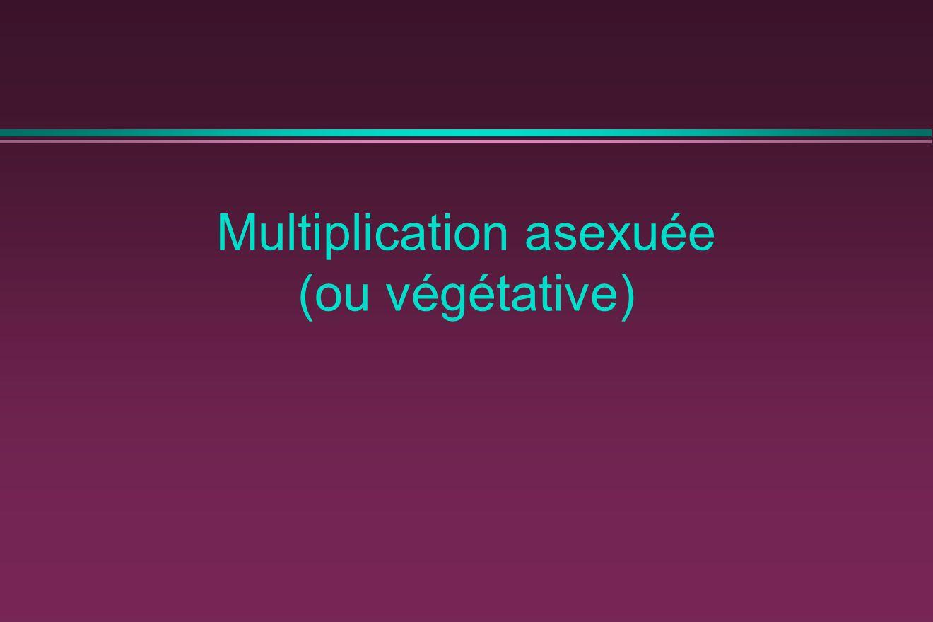 Multiplication asexuée (ou végétative)