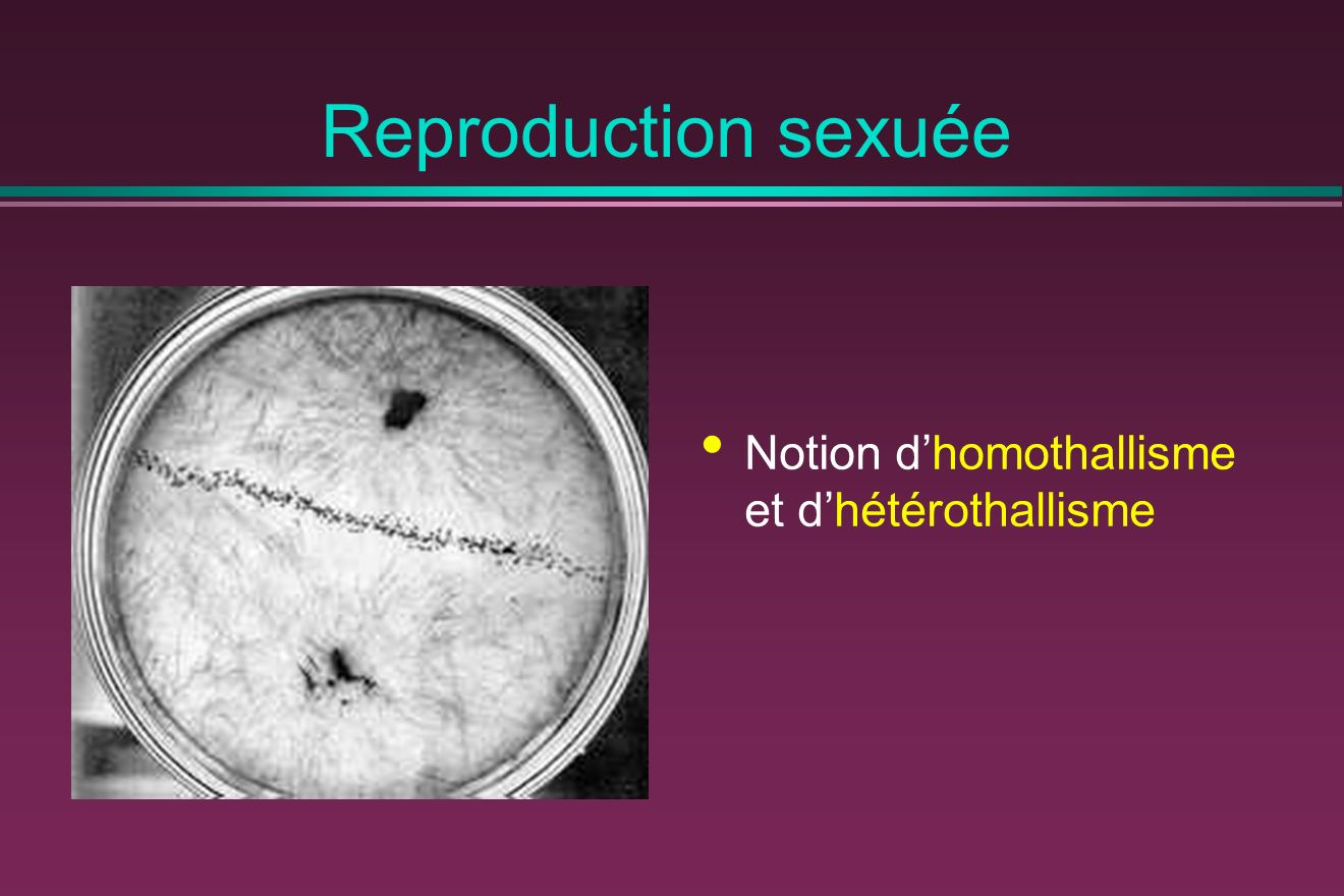 Reproduction sexuée Notion d'homothallisme et d'hétérothallisme