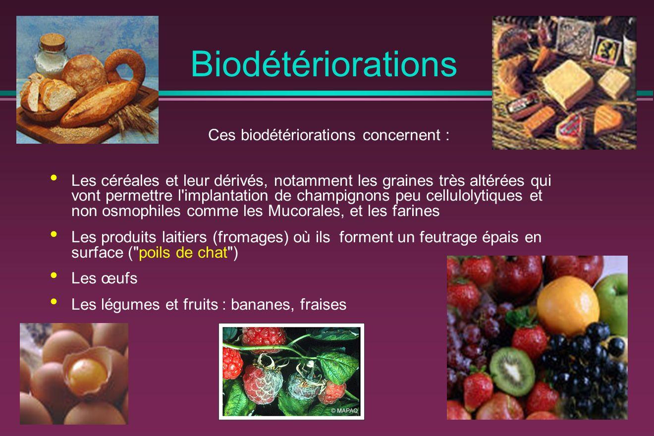 Ces biodétériorations concernent :