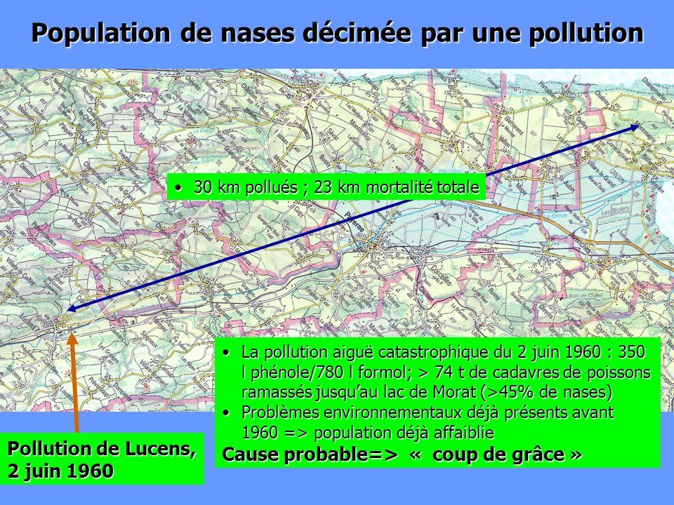 Population de nases décimée par une pollution