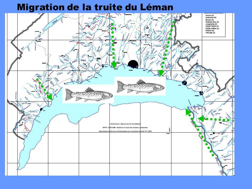 Migration de la truite du Léman