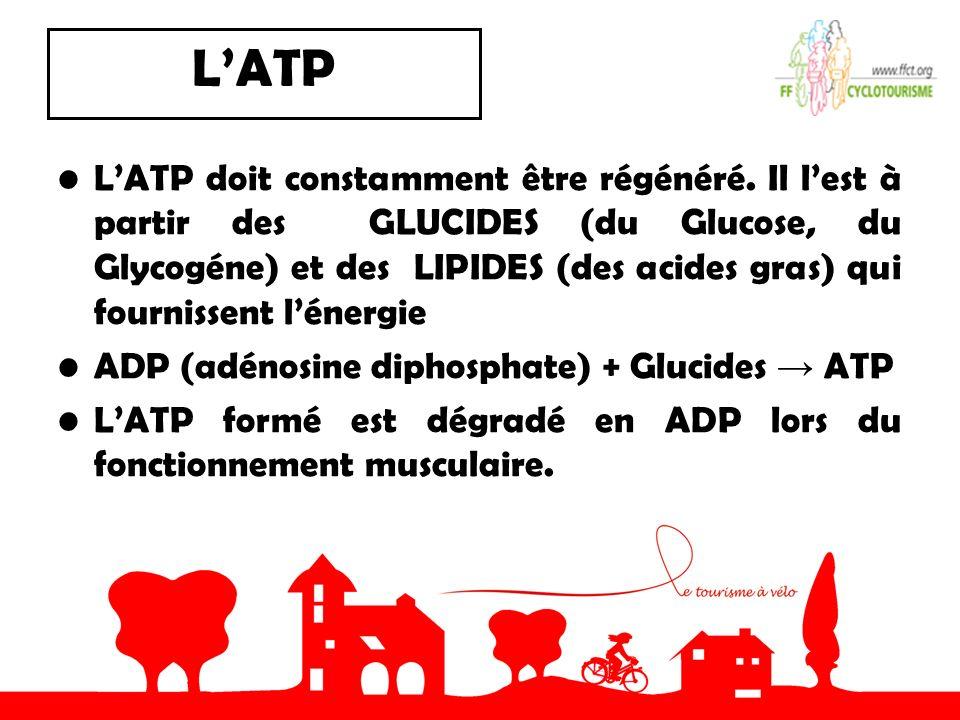 L'ATP
