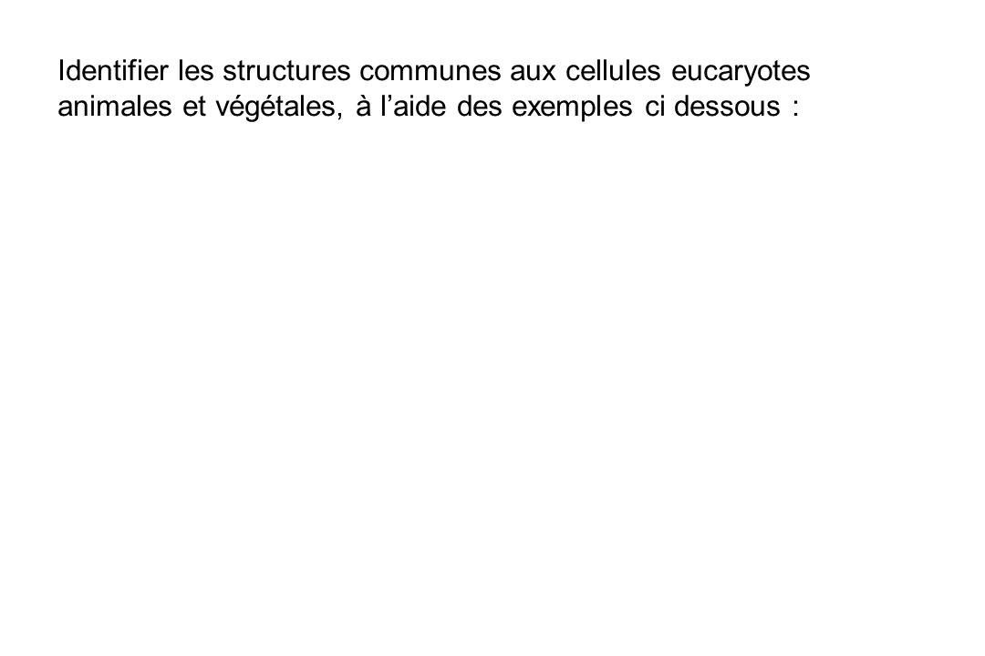 Identifier les structures communes aux cellules eucaryotes