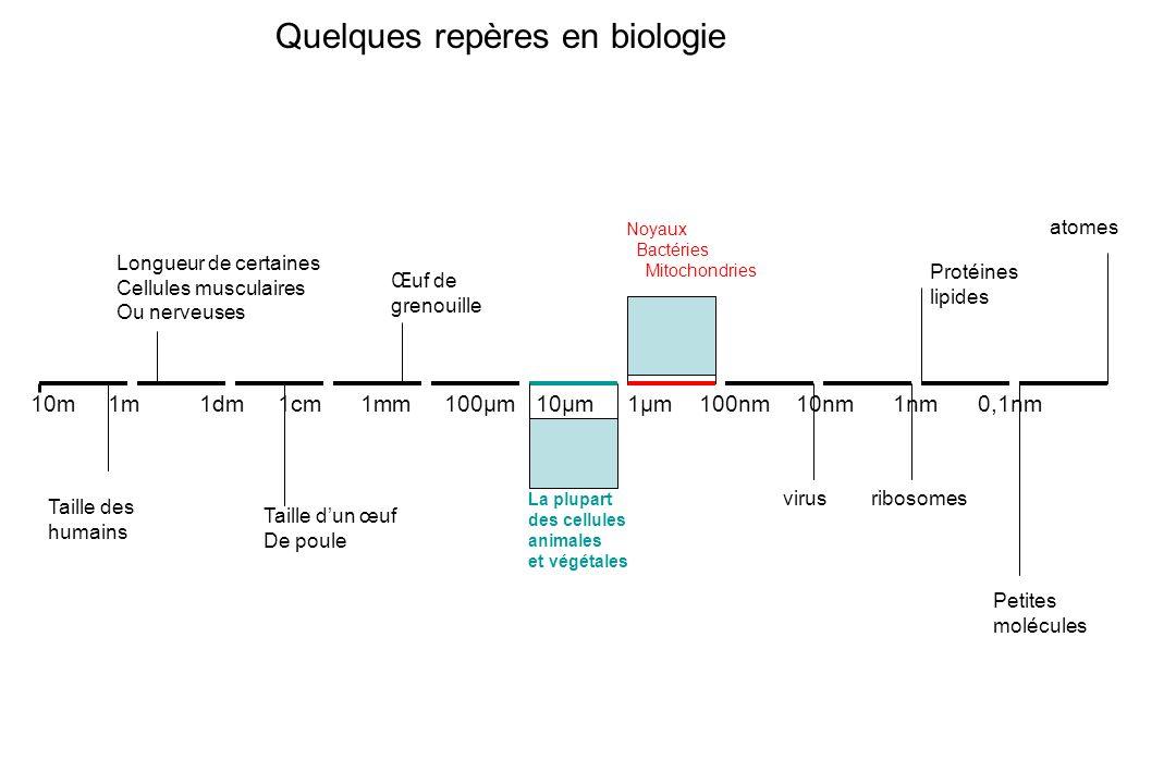 Quelques repères en biologie