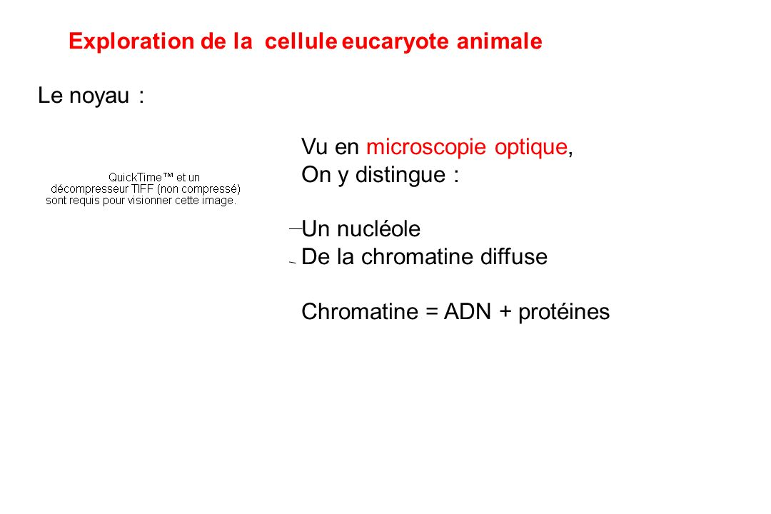 Exploration de la cellule eucaryote animale