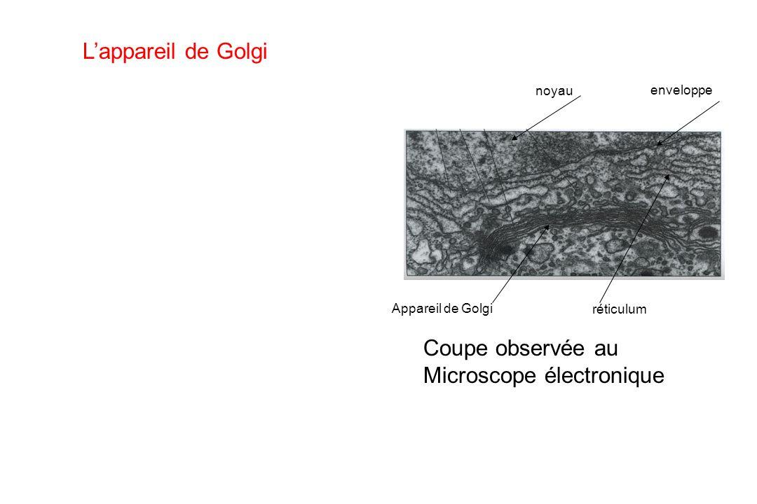 Microscope électronique