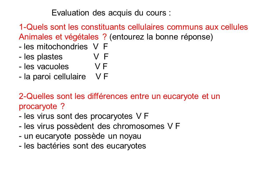Evaluation des acquis du cours :