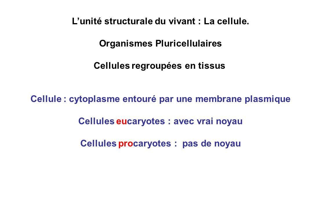 L'unité structurale du vivant : La cellule.