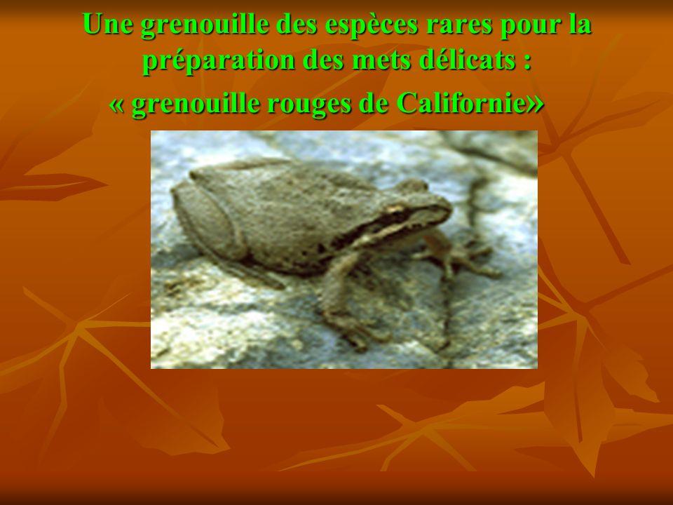 Une grenouille des espèces rares pour la préparation des mets délicats : « grenouille rouges de Californie»