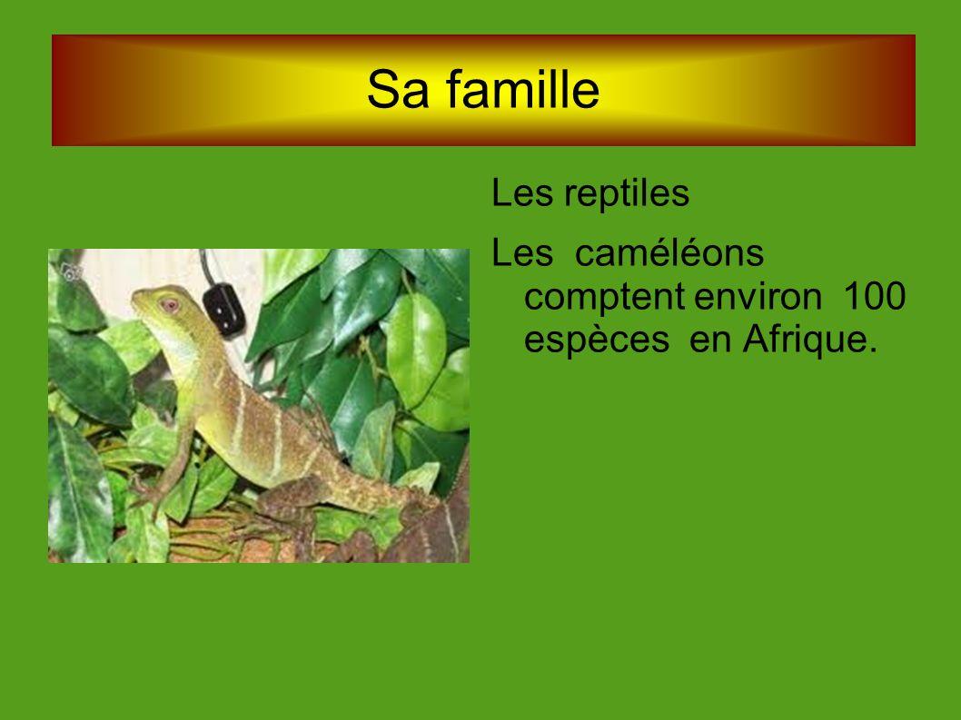 Sa famille Les reptiles
