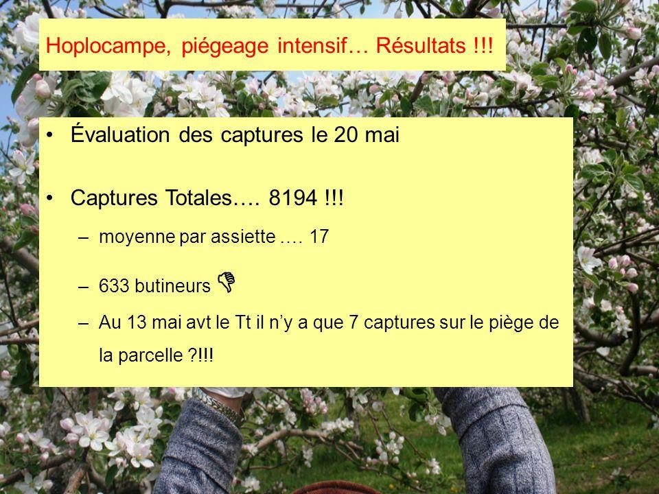 Hoplocampe, piégeage intensif… Résultats !!!