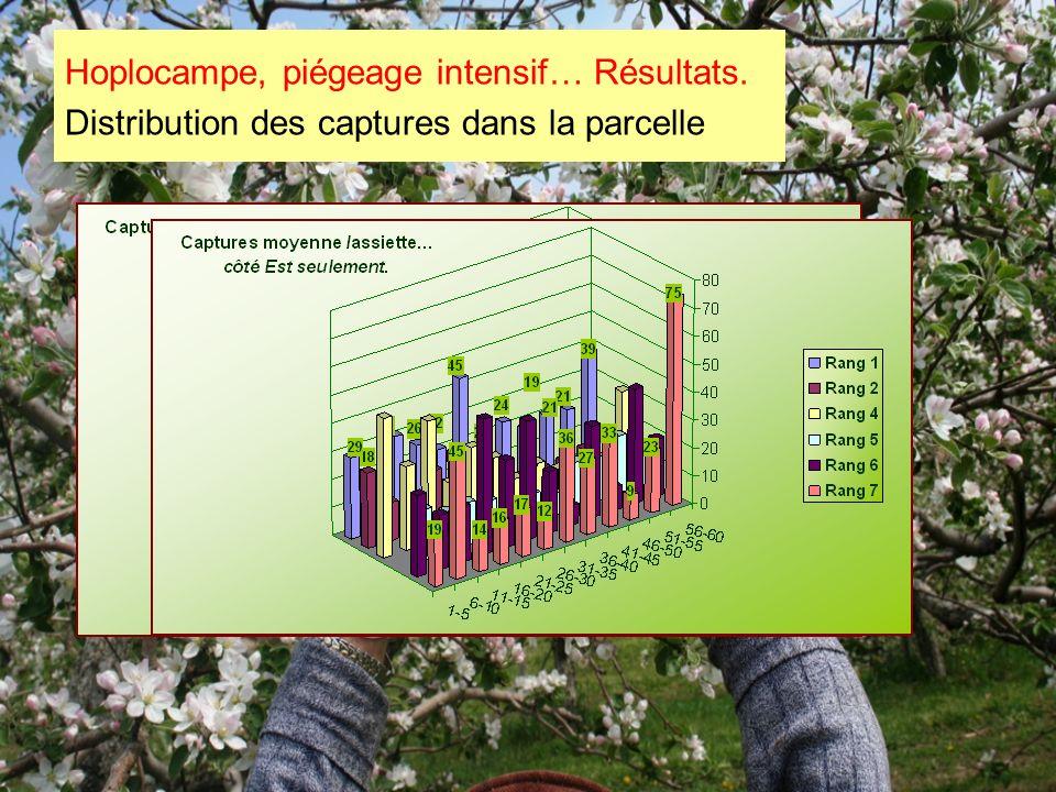 Hoplocampe, piégeage intensif… Résultats