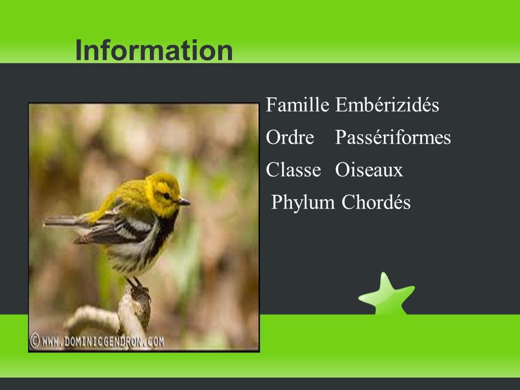 Information Famille Embérizidés Ordre Passériformes Classe Oiseaux