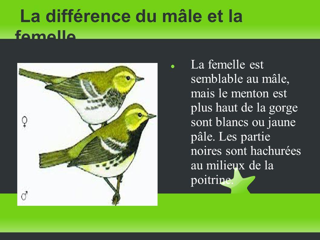 La différence du mâle et la femelle