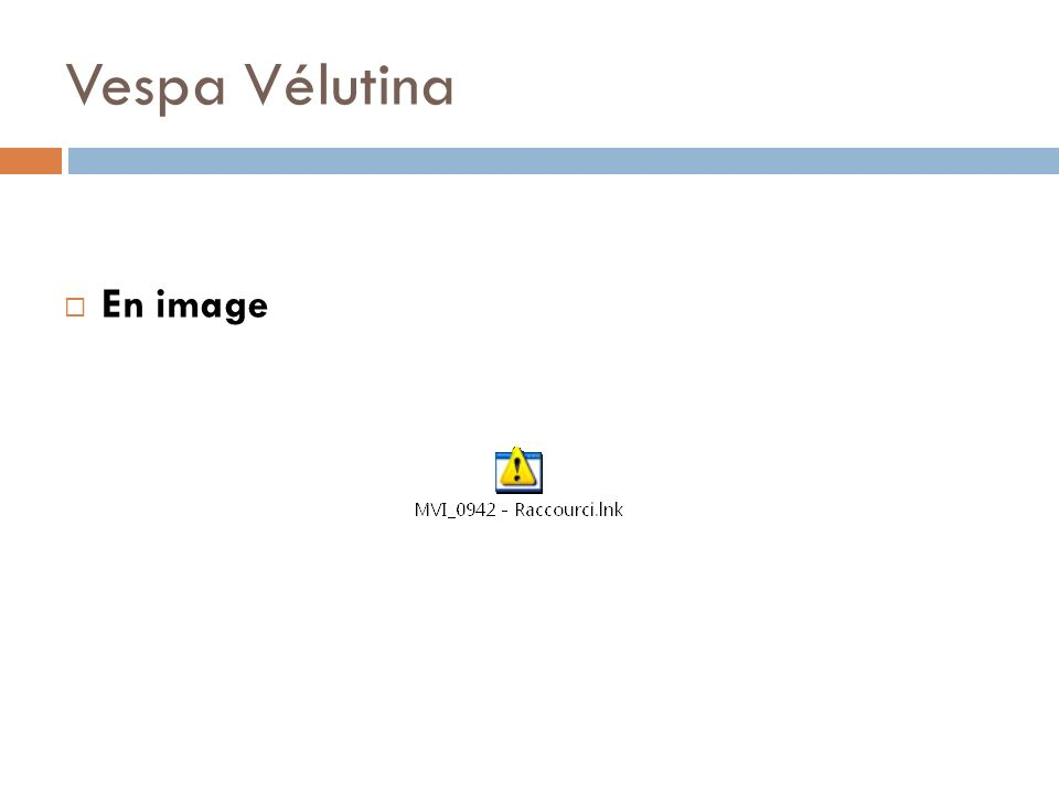 Vespa Vélutina En image