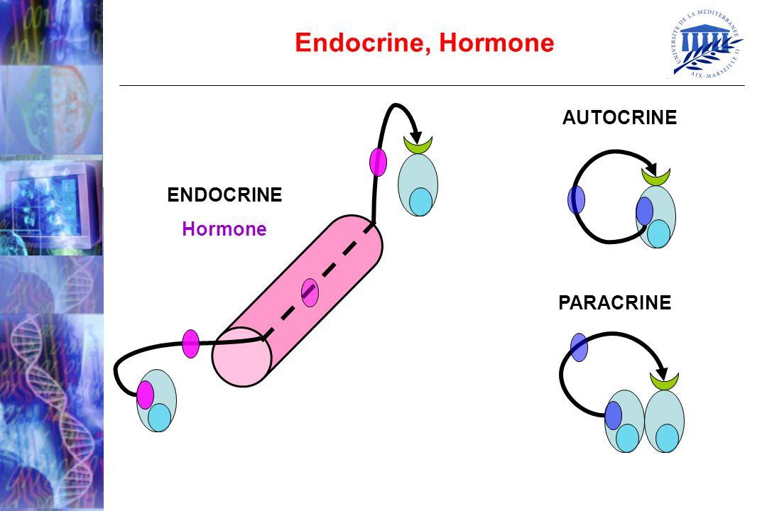 Endocrine, Hormone AUTOCRINE PARACRINE ENDOCRINE Hormone