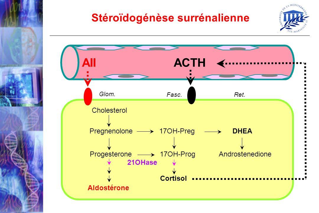 ACTH AII Stéroïdogénèse surrénalienne Cholesterol
