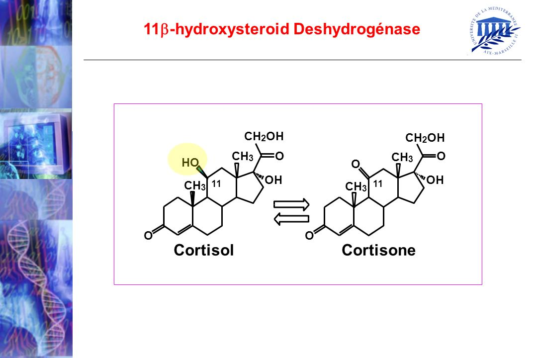 11-hydroxysteroid Deshydrogénase