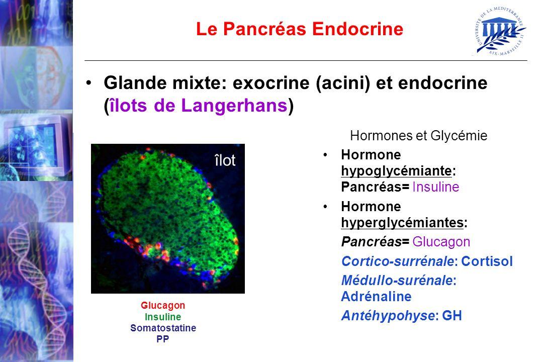 Glucagon Insuline Somatostatine PP