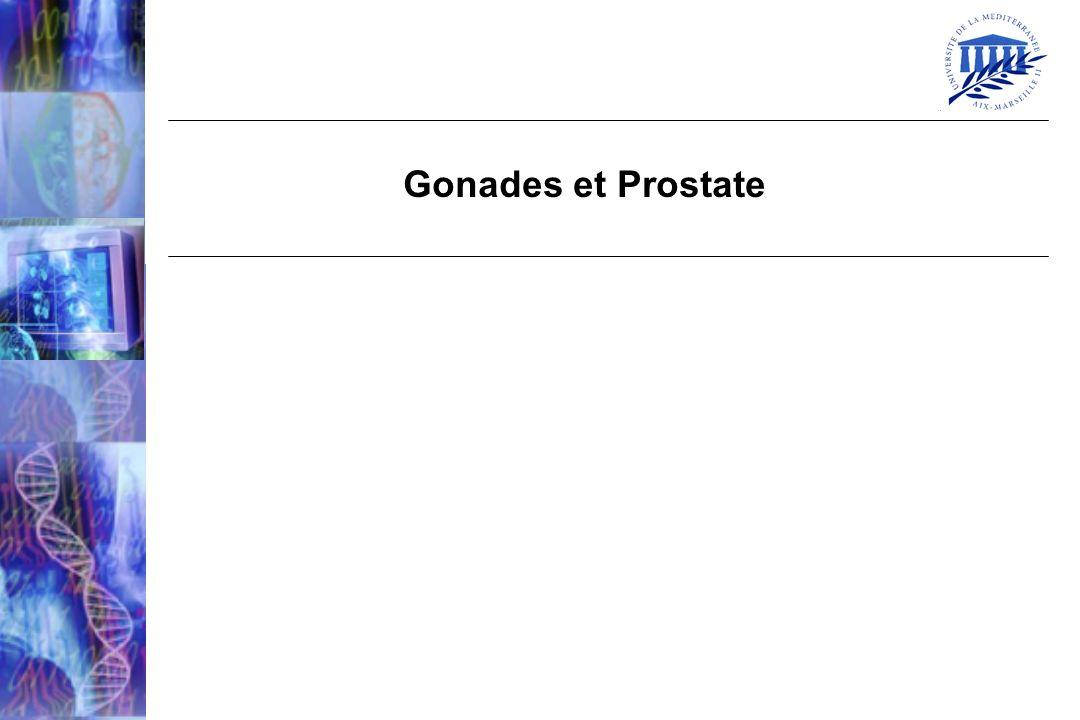 Gonades et Prostate