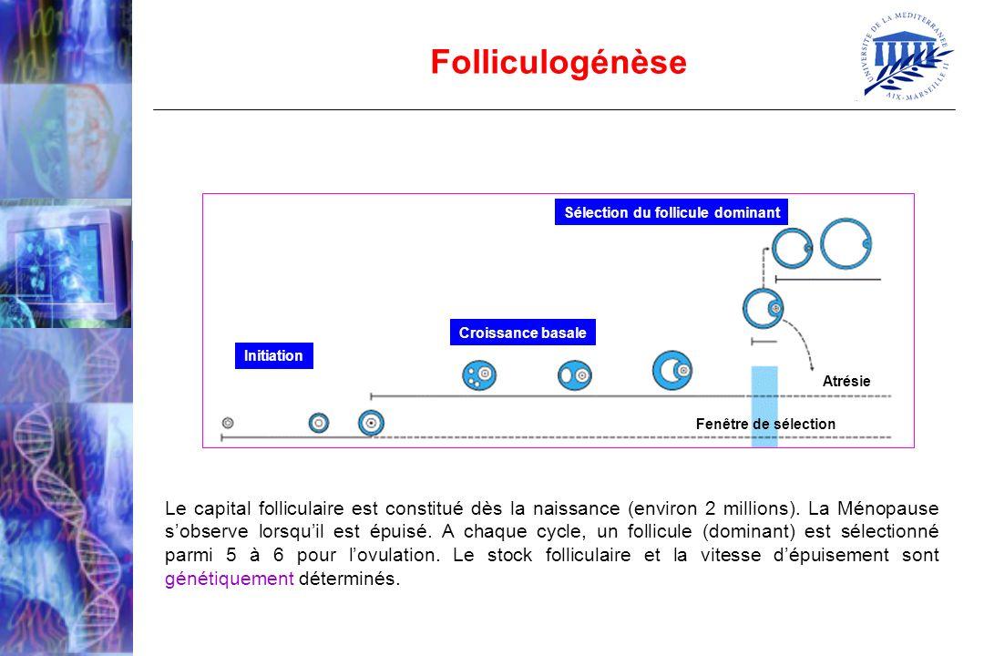 Folliculogénèse Initiation. Croissance basale. Sélection du follicule dominant. Atrésie. Fenêtre de sélection.