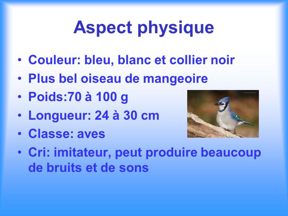 Aspect physique Couleur: bleu, blanc et collier noir