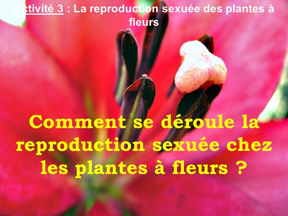 Comment se déroule la reproduction sexuée chez les plantes à fleurs