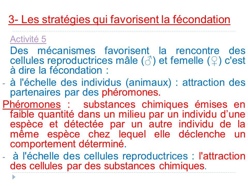 3- Les stratégies qui favorisent la fécondation