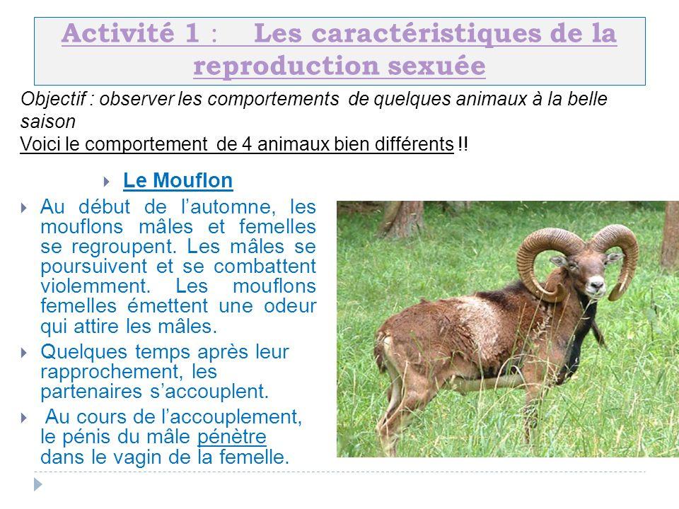 Activité 1 : Les caractéristiques de la reproduction sexuée
