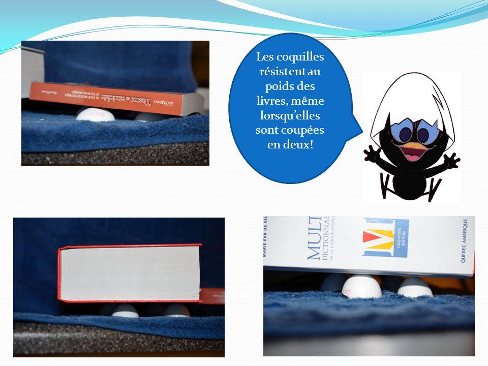 Les coquilles résistent au poids des livres, même lorsqu'elles sont coupées en deux!