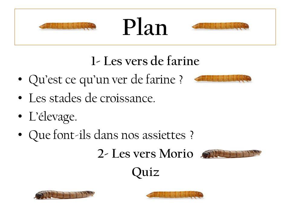 Plan 1- Les vers de farine Qu'est ce qu'un ver de farine