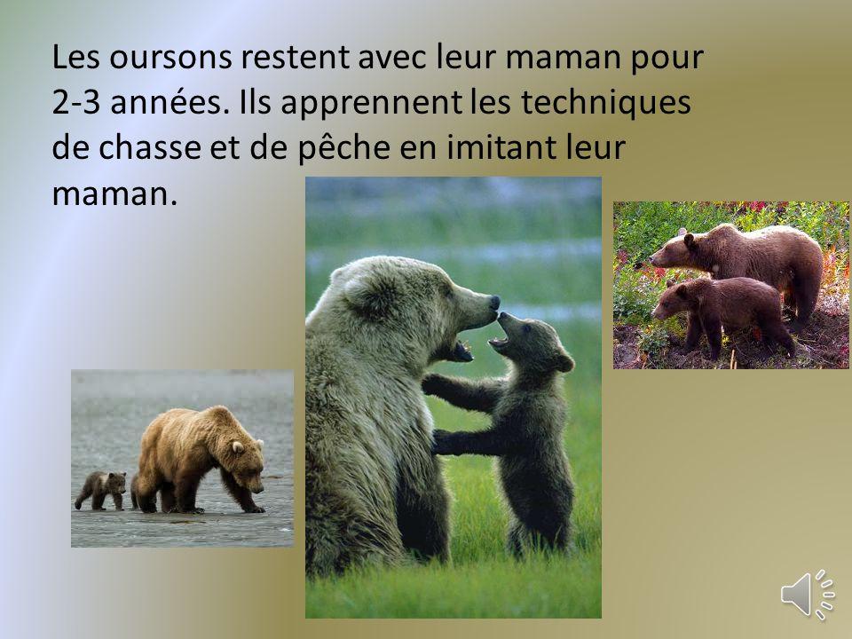 Les oursons restent avec leur maman pour 2-3 années