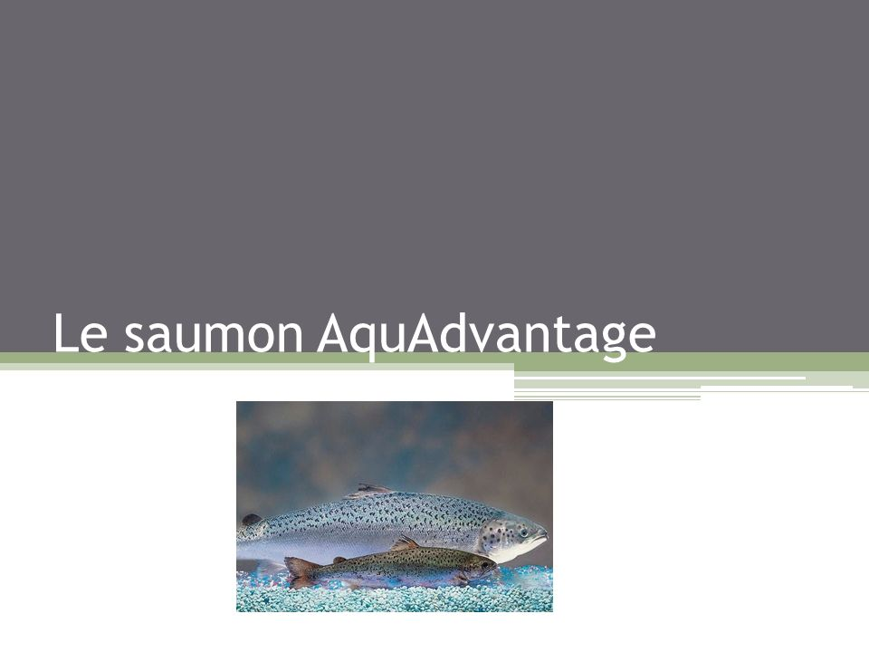 Le saumon AquAdvantage