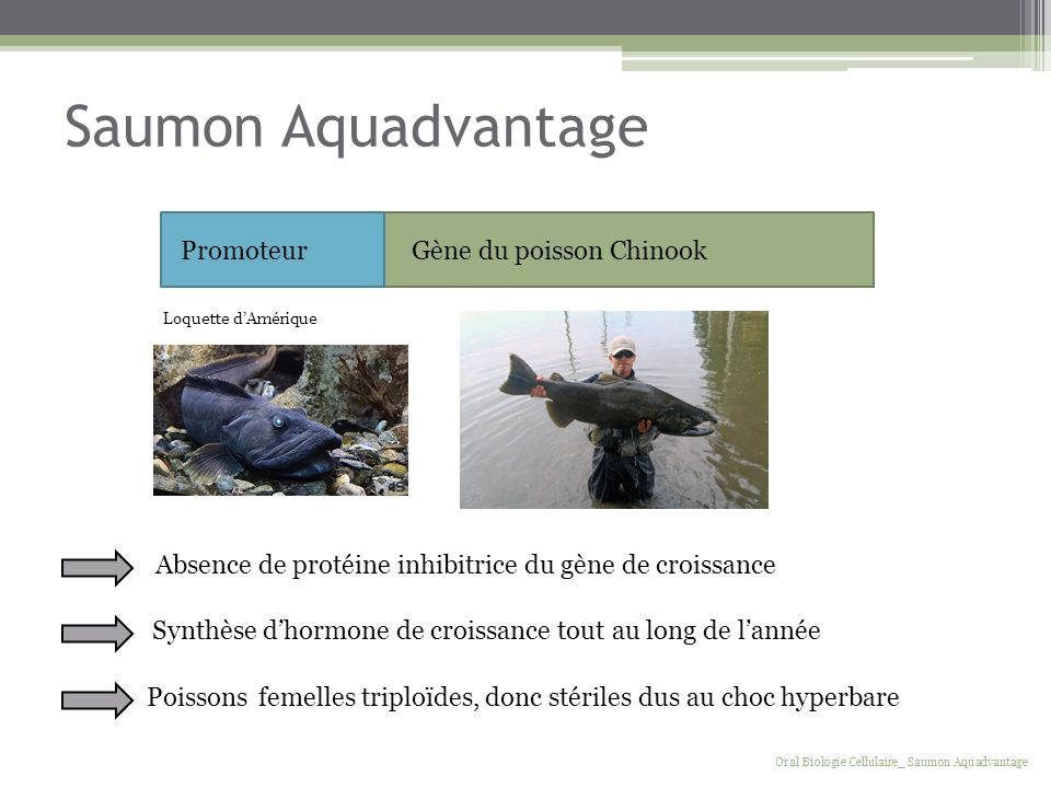 Saumon Aquadvantage Promoteur Gène du poisson Chinook