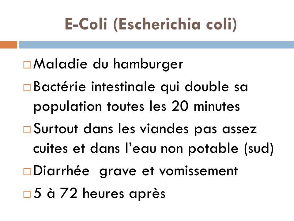 E-Coli (Escherichia coli)