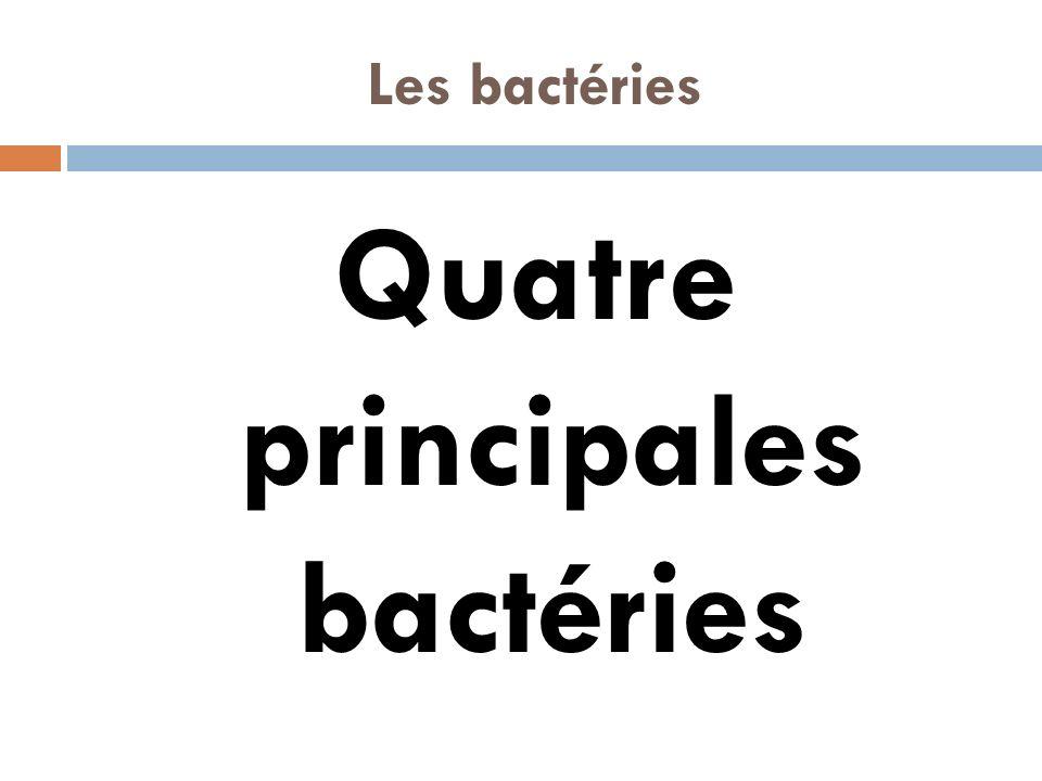 Quatre principales bactéries