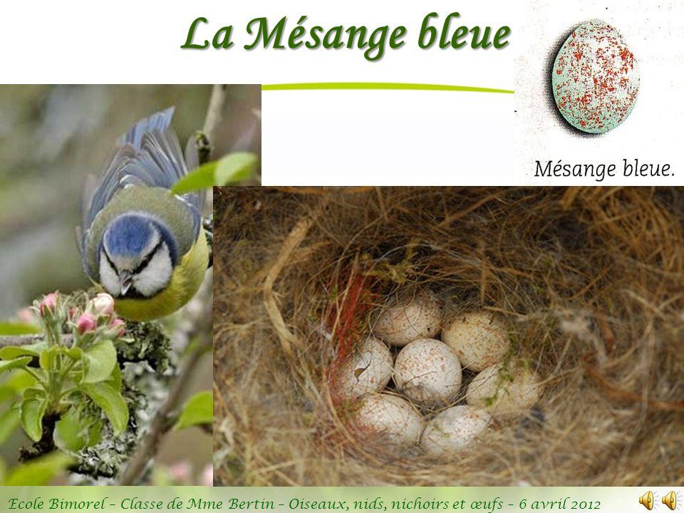 La Mésange bleue C'est un des oiseaux les plus communs dans nos parcs et jardins.
