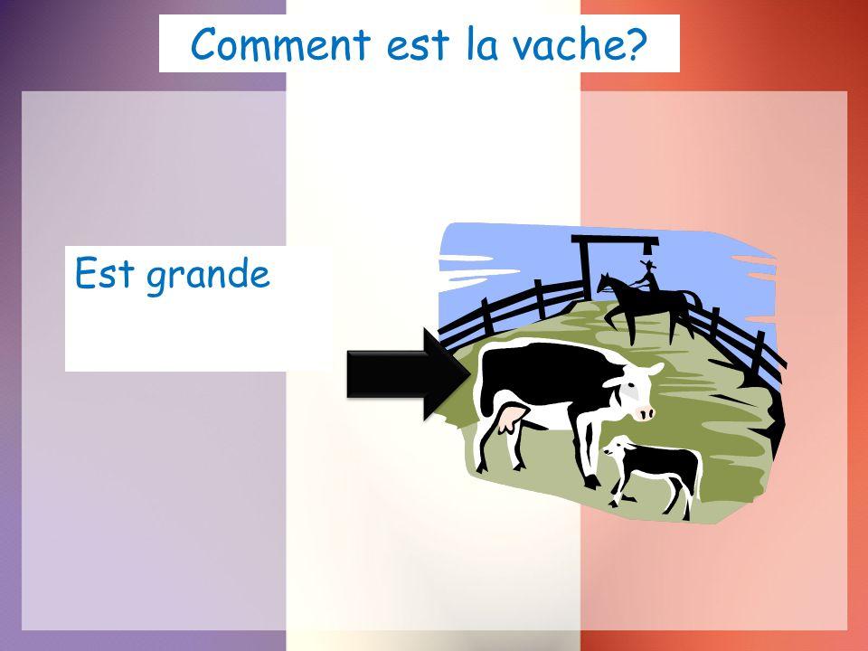 Comment est la vache Est grande