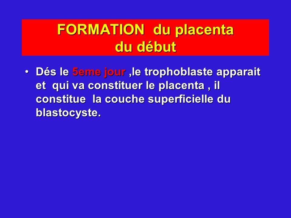 FORMATION du placenta du début