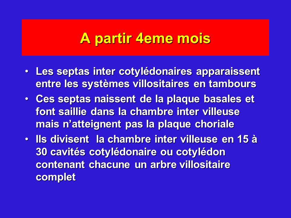 A partir 4eme mois Les septas inter cotylédonaires apparaissent entre les systèmes villositaires en tambours.