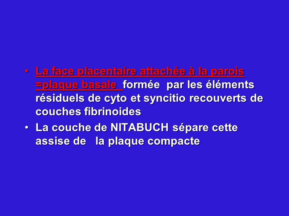 La face placentaire attachée à la parois =plaque basale formée par les éléments résiduels de cyto et syncitio recouverts de couches fibrinoides