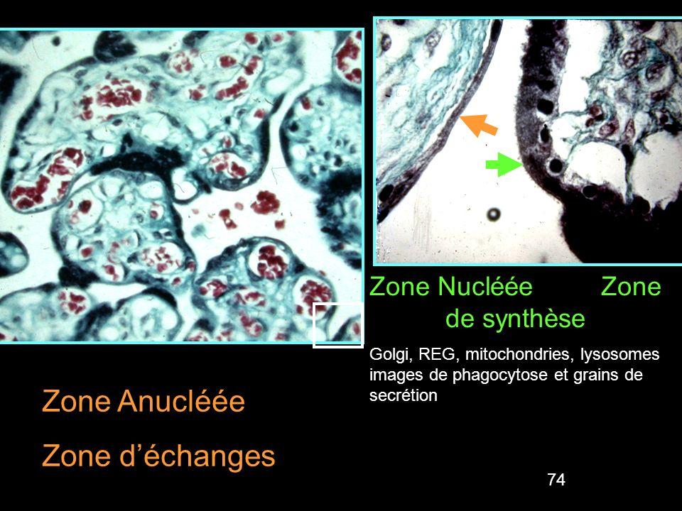 Zone Nucléée Zone de synthèse