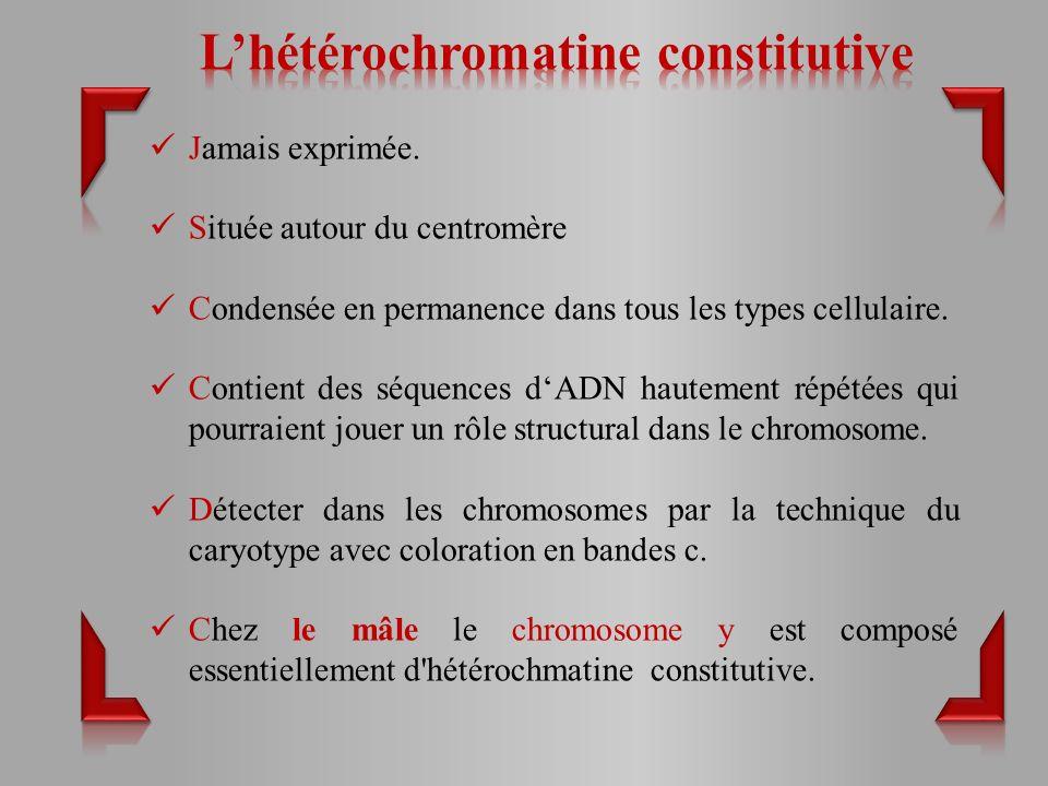 L'hétérochromatine constitutive