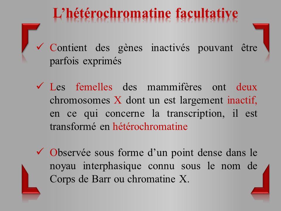 L'hétérochromatine facultative