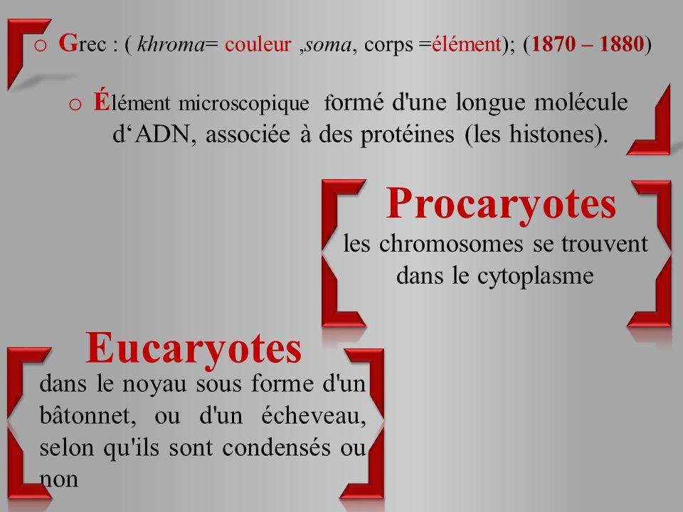 les chromosomes se trouvent dans le cytoplasme